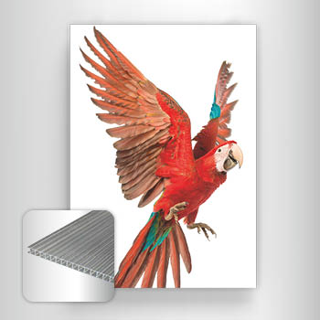 Corrugated plastic boards (large print runs)